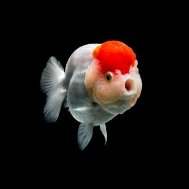 8.Hafta Kaçan Balık Büyük Olur